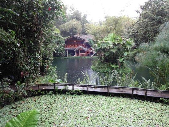 Lago Mindo Frog Concert