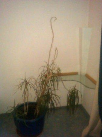 Resort Die Wutzschleife: Pflanze auf dem Zimmer