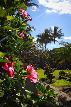 Kihei Bay Vista: Manicured Grounds - beautiful plumerias