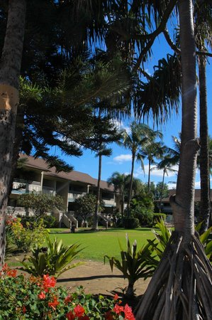 Kihei Bay Vista: Manicured Grounds