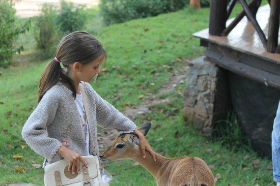 The Emakoko: Mi hija con un cachorro de impala