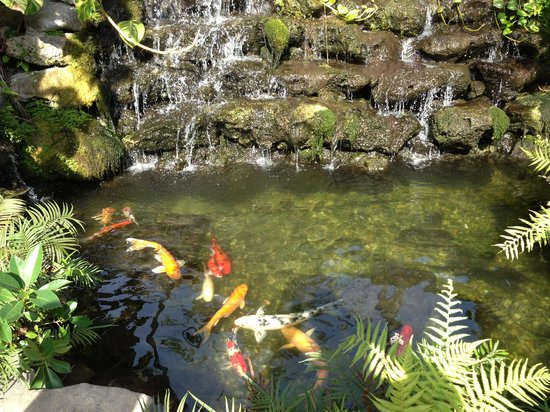 Almond Tree Inn :                   Fish pond