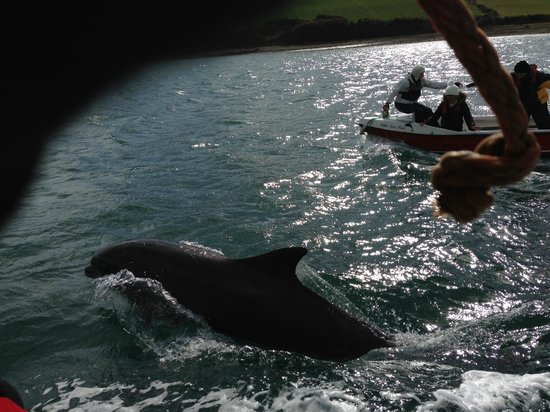 Dingle Dolphin Boat Tours :                   Fungi, the Dingle dolphin