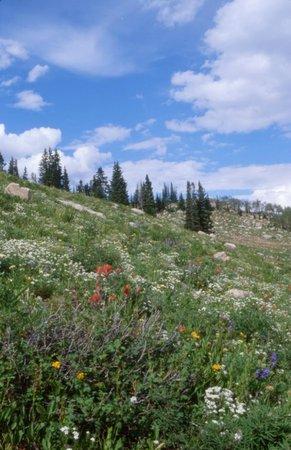 Steamboat Springs Co Beautiful Summer Wild Flowers