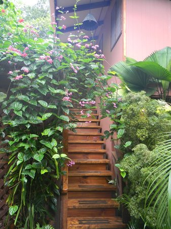 Hotel Banana Azul:                                     Stairs to the Sloth Cabinas