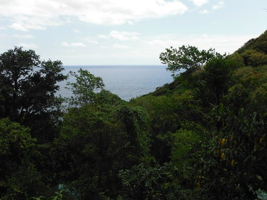 Jungle Bay, Dominica:                   Gorgeous view (a little dark in the photo)