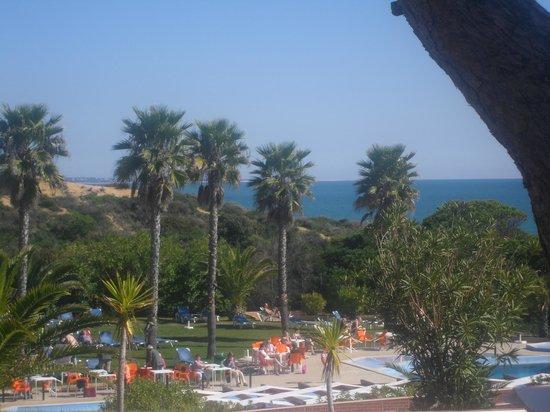 Auramar Beach Resort: Trees by the pool