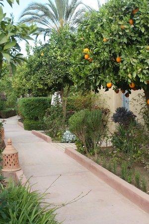 Hotel Dar Zitoune: Allées menant aux chambres