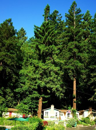 Fern Grove Cottages: Under the Redwoods