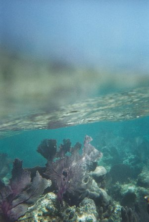Paya Bay Resort : Over, and underwater
