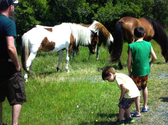 Francis Scott Key Family Resort:                                     Wild Horses