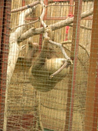 Foundation Jaguar Rescue Center:                                     Sloth