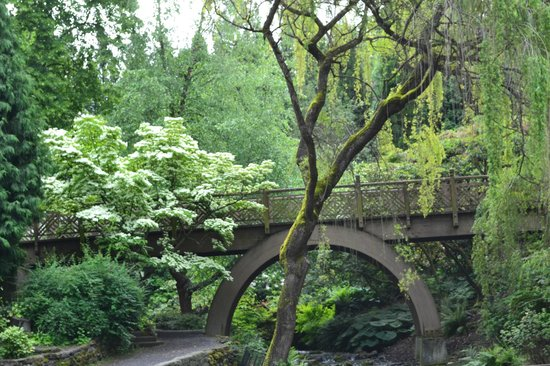 Lots of greenery picture of crystal springs rhododendron garden portland tripadvisor for Crystal springs rhododendron garden