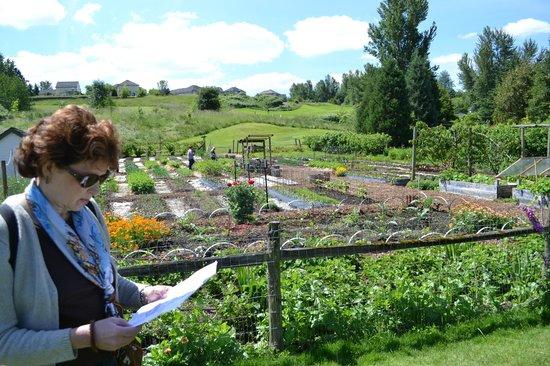 McMenamins Edgefield:                   The Veggie Garden