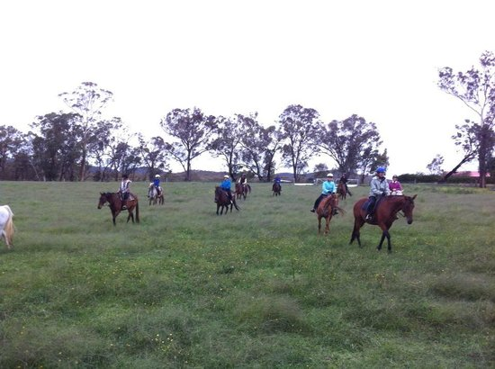 Yarrabin Holiday Ranch :                   guests helping to move cattle