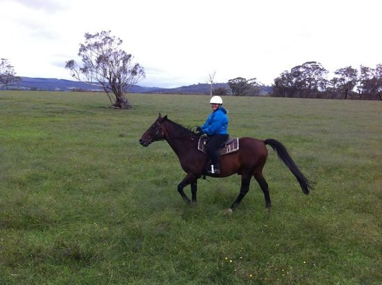Yarrabin Holiday Ranch:                   me riding through one of the paddocks