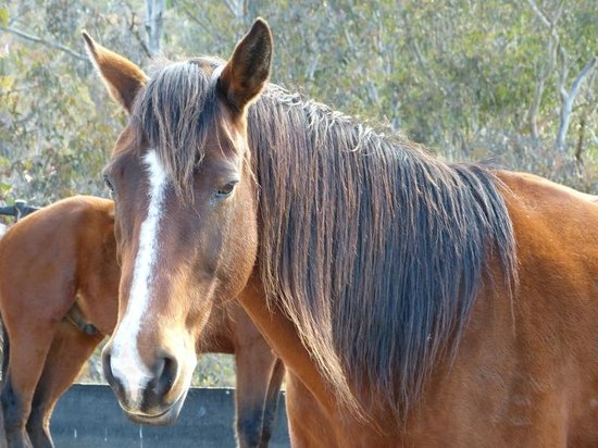 Yarrabin Holiday Ranch:                   One of the beautiful horses you can ride through the Aussie bush