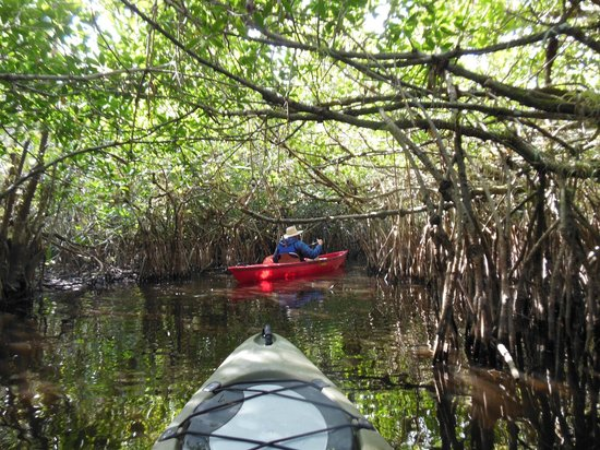 Shurr Adventure Company Day Tours: Paddling down the mangrove highway