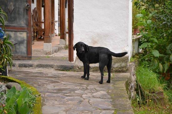 Hosteria La Quinta:                   Owners dog.