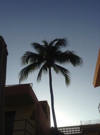 Casa Coco:                   nice palms around the pool