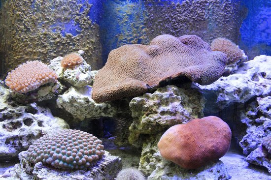 Florida Keys Eco-Discovery Center :                   Coral Aquarium