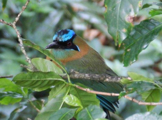 La Montana y el Valle Coffee Estate Inn: One of many beautiful birds