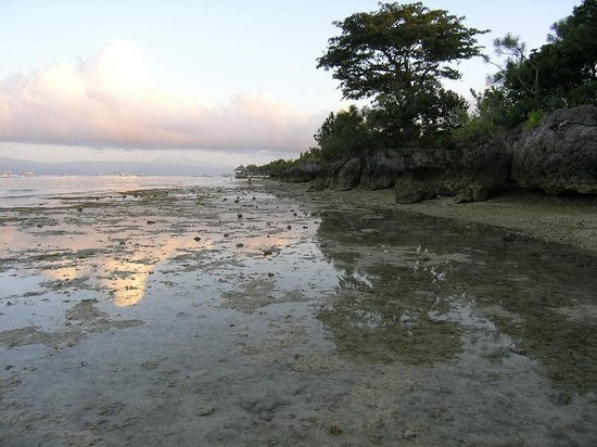 Sea Turtle House Moalboal:                   seaside at 6 am -lowtide and the way to white beach