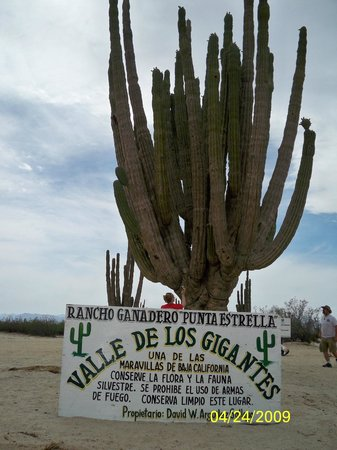 Valley of the Giants:                   Welcome to the Valle de los Gigantes