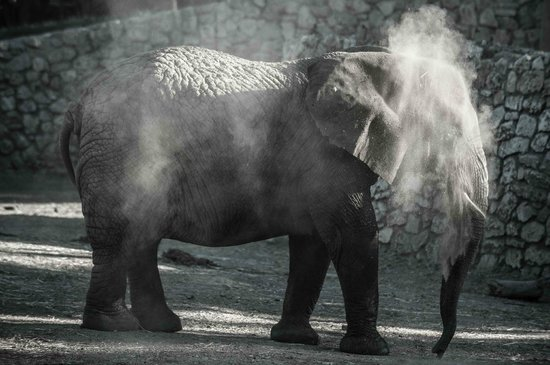 Safari Park :                   An elephant cooling itself