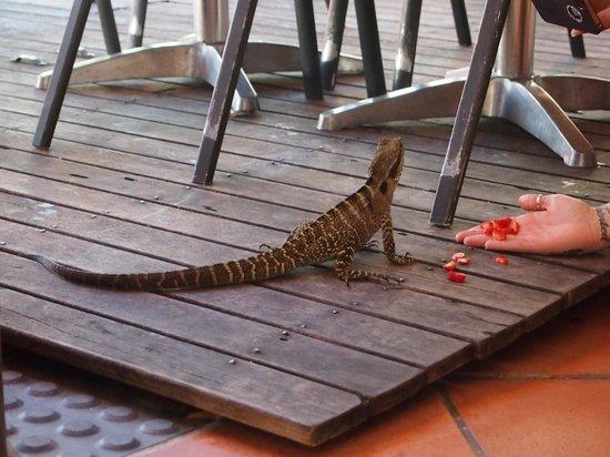 The Hideout Byron Bay:                   hand fed wildlife