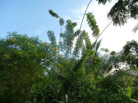 Pavana Resort : Nice nature...