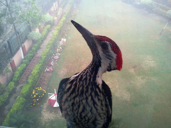 Hotel Aquatic Palace:                   Had a unusual visitor in the morning!