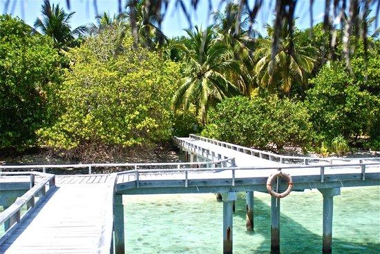 Kuramathi Island Resort: dalla camera