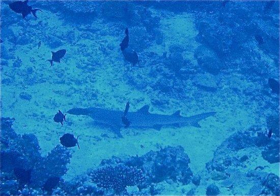 كوراماتي آيلاند ريزورت: squaletto, diving