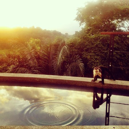 Villa Perezoso:                   Monkey friend by the pool