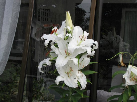Shakespeare House:                   lilies at the car park