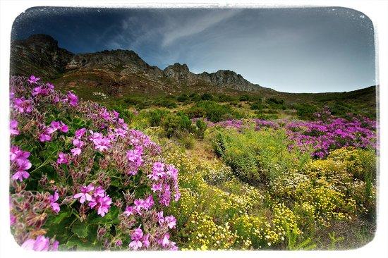 Tintswalo Atlantic: Fynbos At Tintswalo