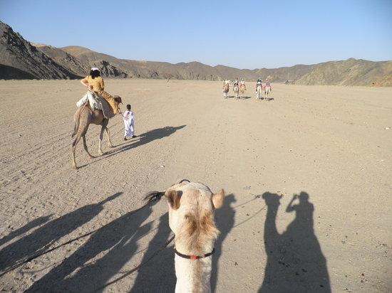 Three Corners Fayrouz Plaza Beach Resort: Escursione organizzata dal resort tramite t.o. : sul cammello nel deserto
