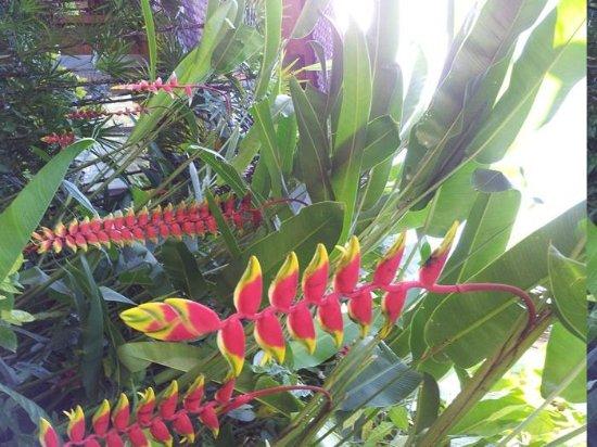 Sri Bungalows:                   Garden