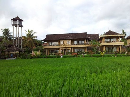 Sri Bungalows:                   View from the rice field