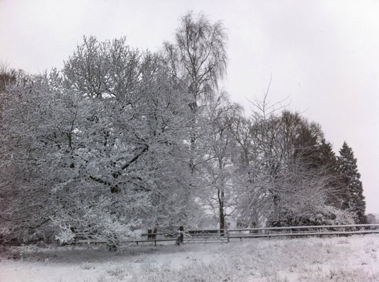 Woodlands Lodge Hotel: The trees in the garden in the snow