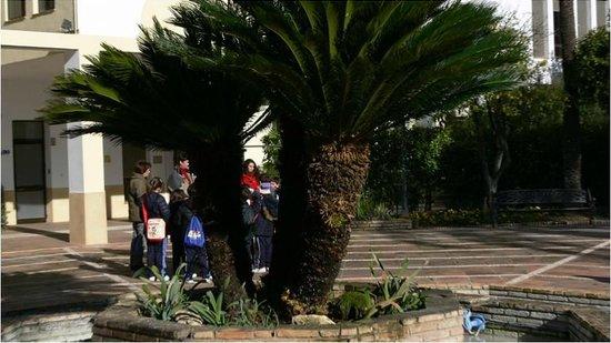 La cica de 500 años - Picture of Jardin Botanico de Cordoba, Cordoba - TripAd...