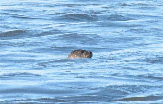 Comfort Inn Boardwalk: Seal at Ocean City's inlet