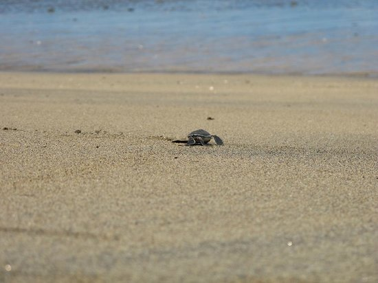 La Case Robinson : Emergence de tortues