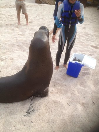 Four Seasons Resort Punta Mita: Sea Lion