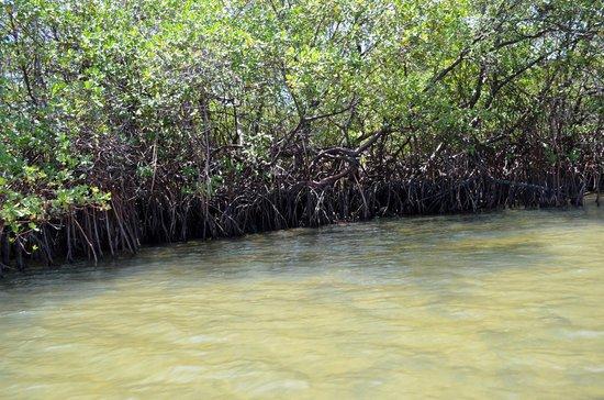 Dunas de Marape: Dunas de Marapé - Jequiá da Praia (AL)