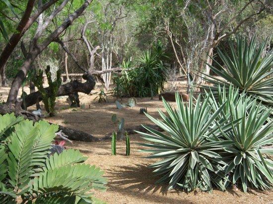 desert landscaping picture of quinta mazatlan mcallen