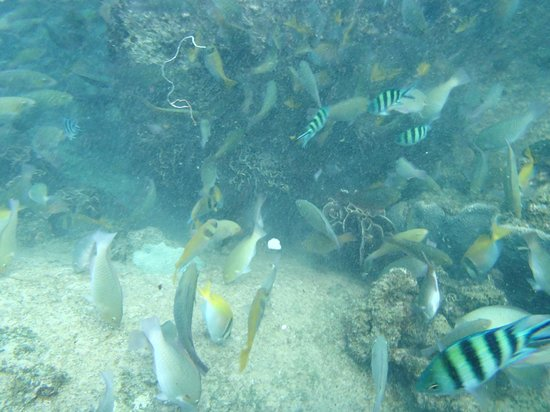 View Rock Resort:                   Plenty of fish right by steps into tghe water
