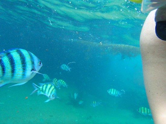 View Rock Resort:                   Underwater life