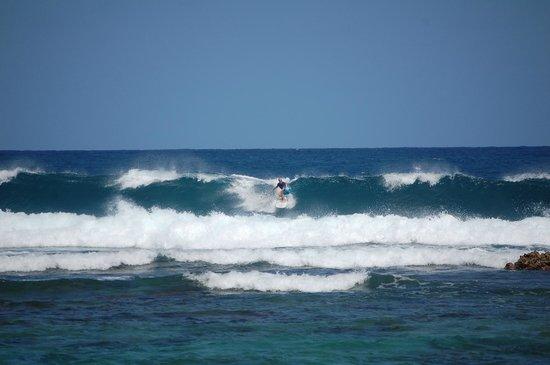 Villa Tropical Oceanfront Apartments on Shacks Beach: Tray surfing at Shacks Beach